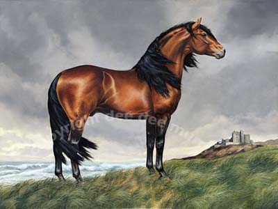 Andalusian Horse Art Picture