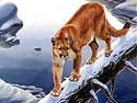 Pet Portrait Wildlife Art Picture