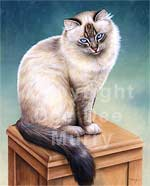 Ragdoll Cat Art Picture
