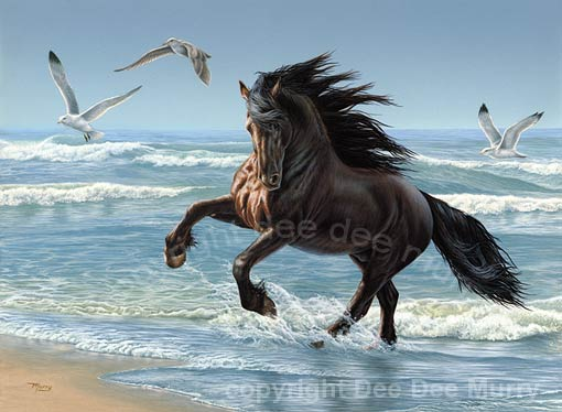 Friesian Horse Stallion. Friesian stallion galloping on